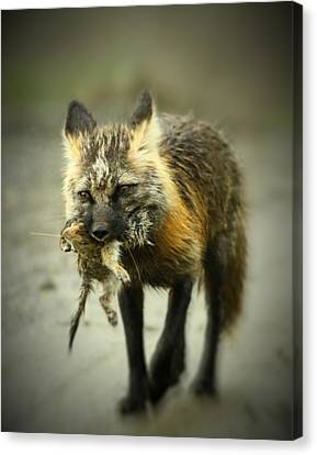 Foxes Dinner Canvas Print