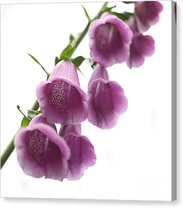Foxglove Flowers Canvas Print - Foxglove Flowers by Tony Cordoza