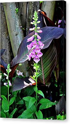 Canvas Print featuring the photograph Foxglove by Helen Haw