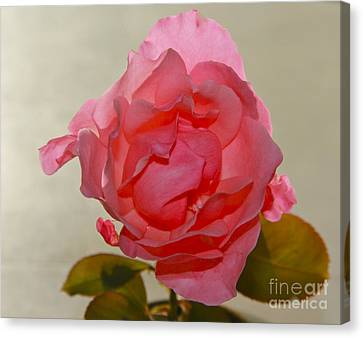 Canvas Print featuring the photograph Fragile Pink Rose by Joan McArthur