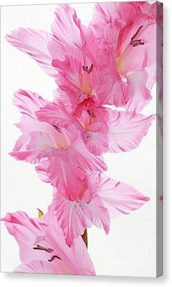 Fragility In Pink Canvas Print by Anita Antonia Nowack