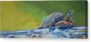 Frank's Turtle Canvas Print by Tracy L Teeter