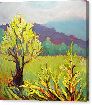 Frazier Wetland 2 Canvas Print by Pam Van Londen