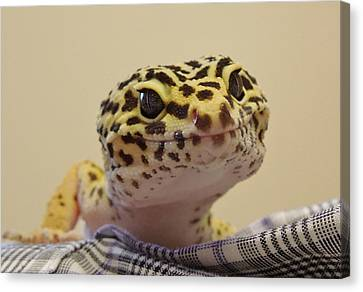 Freckles The Smiling Leopard Gecko Canvas Print by Chad and Stacey Hall