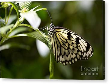 Canvas Print featuring the photograph Fred by Leslie Leda