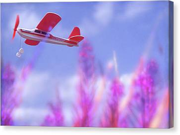 Free Flight Canvas Print by Richard Piper