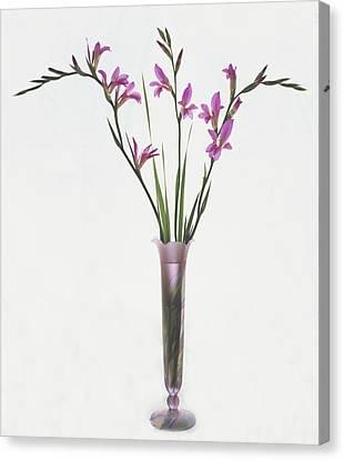 Freesias In Vase Canvas Print