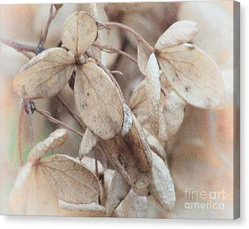Freeze Dried Canvas Print by Arne Hansen