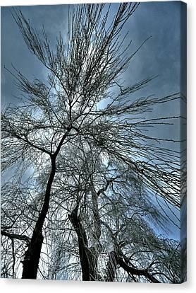 Freezing Rain ... Canvas Print by Juergen Weiss