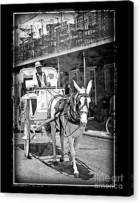 French Quarter Carriage Canvas Print