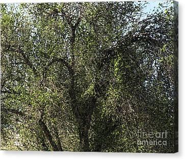 Fresco Tree Canvas Print