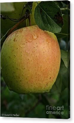 Fresh Apple Canvas Print by Susan Herber