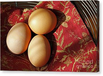 Fresh Eggs Canvas Print by Denise Pohl