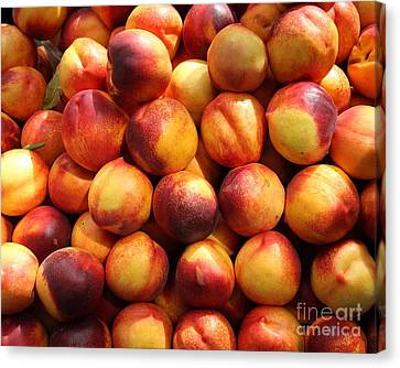 Fresh Nectarines - 5d17815 Canvas Print by Wingsdomain Art and Photography