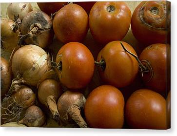 Fresh Tomatos And Onions From A Garden Canvas Print by Joel Sartore