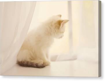 Kitten Canvas Print - Fresh Wonder by Amy Tyler