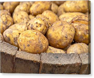 Freshly Harvested Potatoes In A Wooden Bucket Canvas Print by Tom Gowanlock