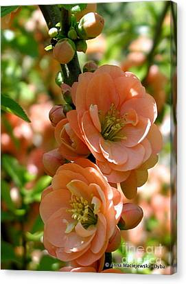 Freshness Of The Spring Canvas Print