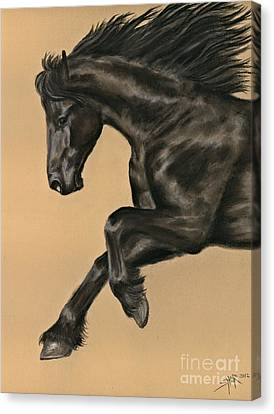 Friesian Portrait Canvas Print