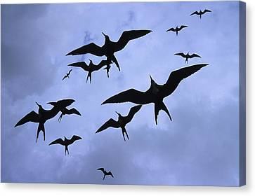 Frigate Birds In Flight. Lighthouse Canvas Print by Ron Watts