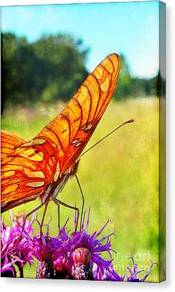Fritillary On Ironweed Canvas Print by Judi Bagwell