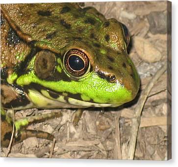 Canvas Print - Frog by Debbie Finley
