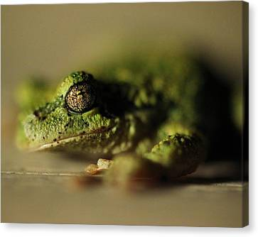 Frog Eyes Canvas Print by Leigh Edwards