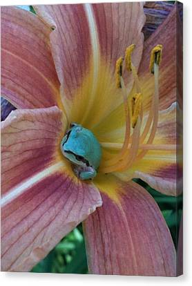 Frog In The Day Lilly Canvas Print by Jeremiah Colley