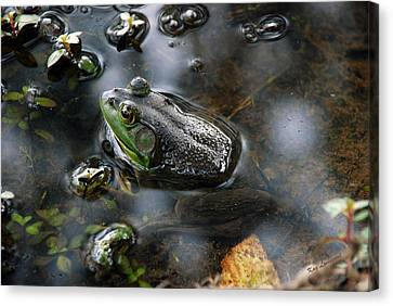 Canvas Print featuring the photograph Frog In The Millpond by Kay Lovingood