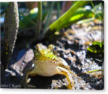 Canvas Print featuring the photograph Frog Life by John Burns