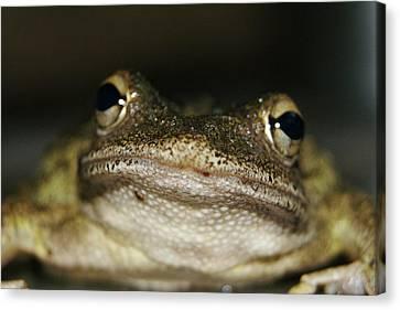 Frog Lips  Canvas Print