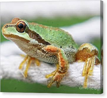 Frog On A Rope Canvas Print by Billie-Jo Miller