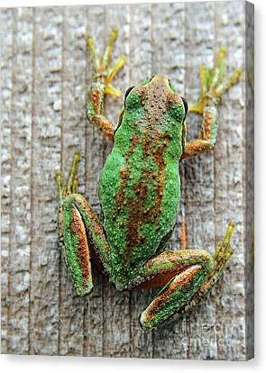Frog On Wall Canvas Print by Billie-Jo Miller