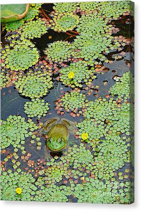 Canvas Print featuring the photograph Frog Pond by Jeanne  Woods
