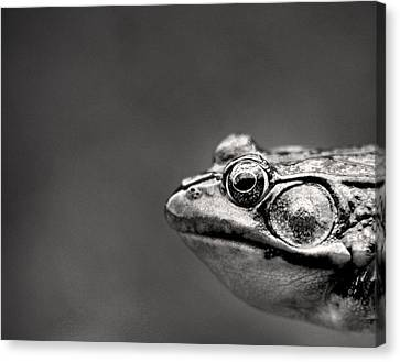 Amphibians Canvas Print - Frog Portrait by Cappi Thompson