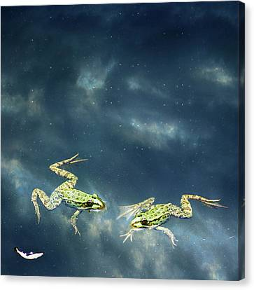 Frogs Canvas Print by Christiana Stawski