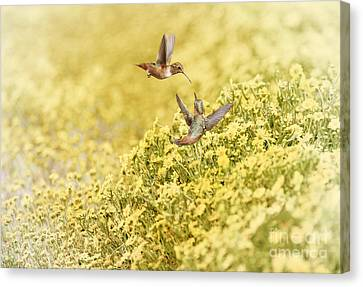 Frolic In The Garden Canvas Print