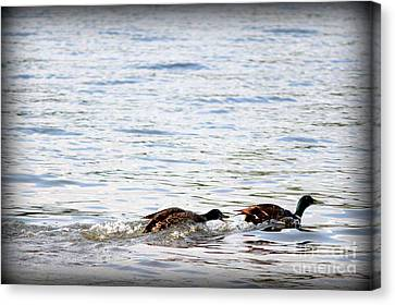 Canvas Print featuring the photograph Frolicking Fun by Kathy  White
