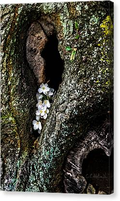 From The Heart Canvas Print by Christopher Holmes