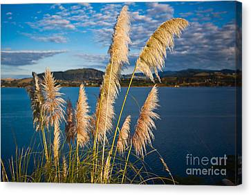 Oceania Canvas Print - Fronds by John Buxton