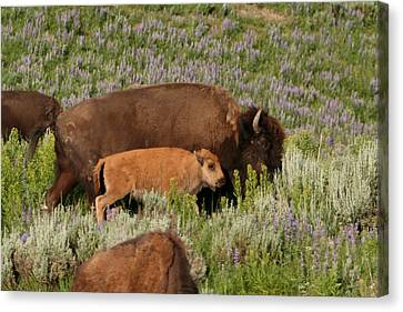 Frontier Family Canvas Print by Bob Bahlmann