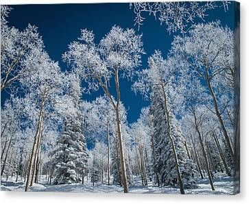 Frost And Snow Covered Trees, Colorado Canvas Print