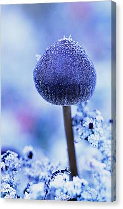 Frost Covered Mushroom, North Canol Canvas Print by Robert Postma