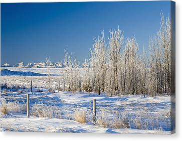 Frost-covered Trees In Snowy Field Canvas Print by Michael Interisano