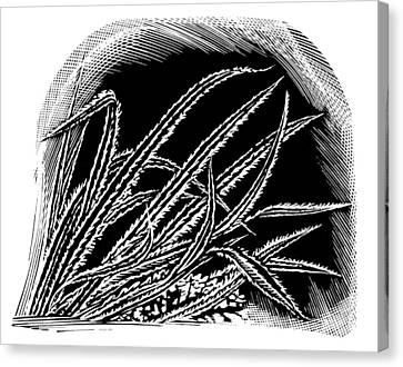 Frost On Blades Of Grass, Woodcut Canvas Print by Gary Hincks