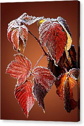 Canvas Print featuring the photograph Frosted Leaves by Judy  Johnson