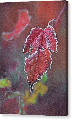 Frosted Canvas Print by Odd Jeppesen