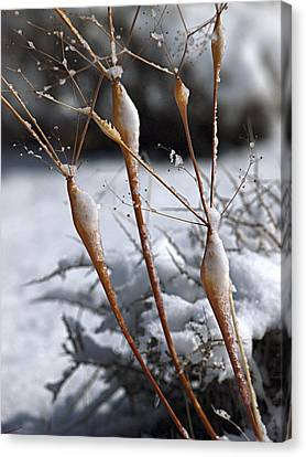 Frosted Trumpets Canvas Print by Joe Schofield