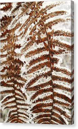 Frosty Fern Canvas Print