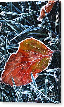 Frosty Leaf Canvas Print by Elena Elisseeva